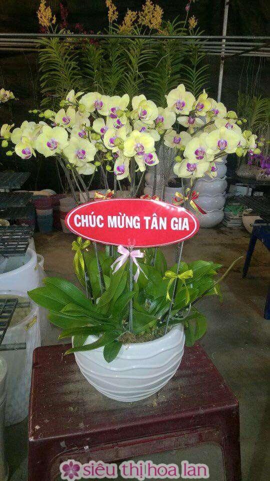 chau-lan-ho-diep-loc-vang