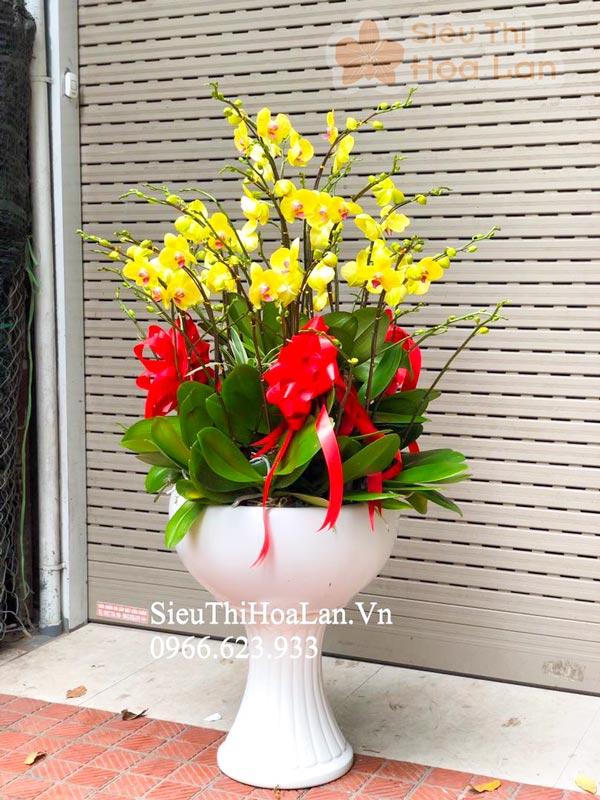 Cho thuê hoa lan hồ điệp giá rẻ