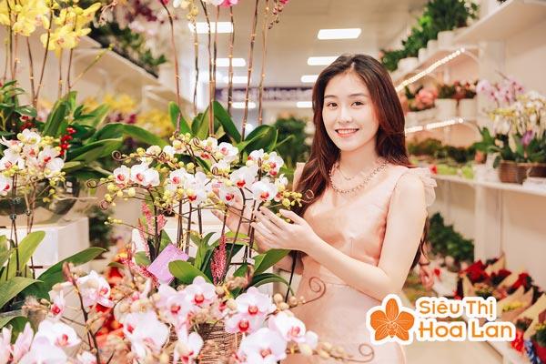 Cung cấp hoa lan các loại trên toàn quốc