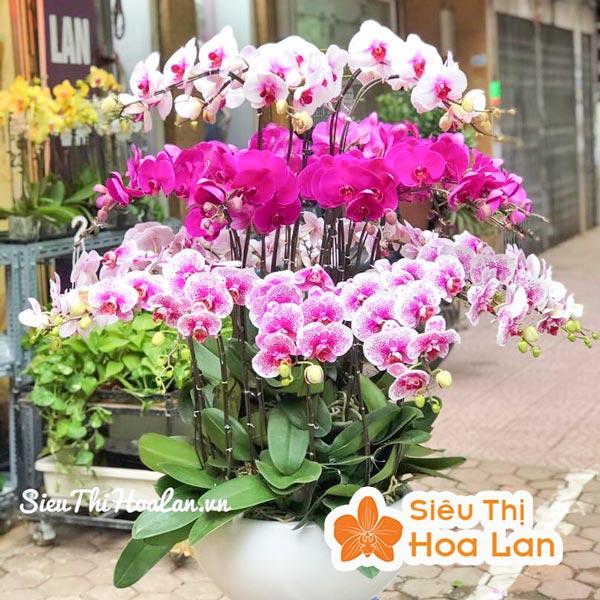 Cung cấp các sản phẩm dịch vụ về hoa lan Hồ điệp
