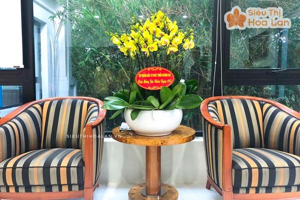 Siêu thị hoa lan cung cấp hoa các loại